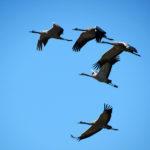 Half a Billion Birds' Favorite Vacation in Israel