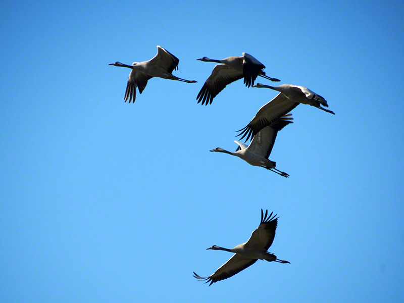 Birding Israel