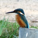 Bird watching Tours in Israel